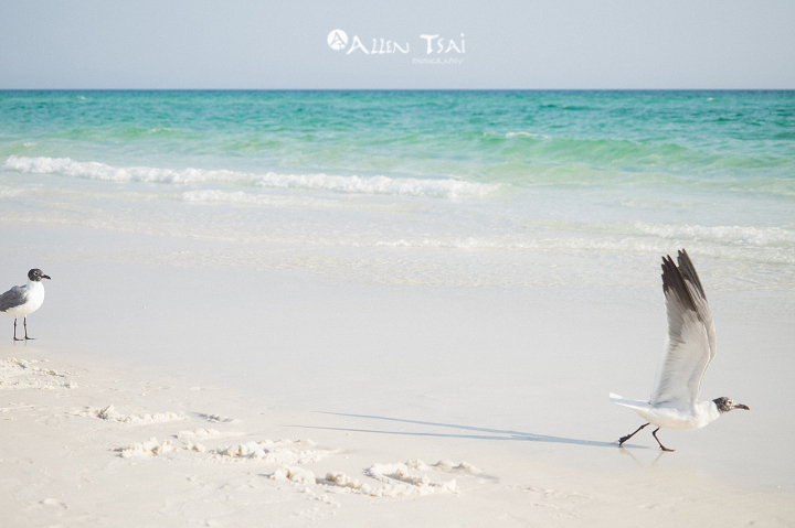 hilton_sandestin_wedding_destin_wedding_photographer